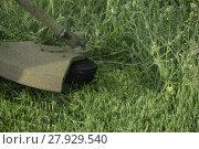 Купить «Mowing green grass using a fishing line trimmer», фото № 27929540, снято 16 июля 2018 г. (c) PantherMedia / Фотобанк Лори