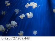 Купить «medusa jellyfish underwater diving photo egypt red sea», фото № 27939448, снято 25 апреля 2019 г. (c) PantherMedia / Фотобанк Лори