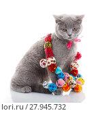 Купить «Scottish Fold cat with colorful decorations sitting on white», фото № 27945732, снято 22 февраля 2018 г. (c) PantherMedia / Фотобанк Лори