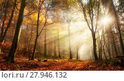 Купить «fascinating light mood in a colorful forest in autumn with sunshine in the fog», фото № 27946132, снято 15 августа 2018 г. (c) PantherMedia / Фотобанк Лори