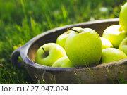 Купить «Organic apples in basket in summer grass. Fresh apples in nature», фото № 27947024, снято 22 февраля 2019 г. (c) PantherMedia / Фотобанк Лори