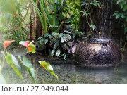 Купить «garden idyll», фото № 27949044, снято 20 июня 2019 г. (c) PantherMedia / Фотобанк Лори