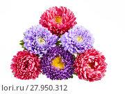 Купить «Bouquet of colorful aster flowers on white background», фото № 27950312, снято 15 августа 2018 г. (c) PantherMedia / Фотобанк Лори