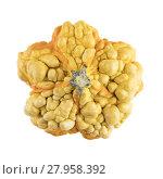 Купить «Bumpy Gourd Isolated», фото № 27958392, снято 20 июля 2018 г. (c) PantherMedia / Фотобанк Лори