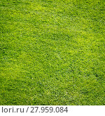 Купить «Green grass field background, texture, pattern», фото № 27959084, снято 19 февраля 2019 г. (c) PantherMedia / Фотобанк Лори