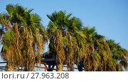 Купить «palm tree», фото № 27963208, снято 24 марта 2018 г. (c) PantherMedia / Фотобанк Лори
