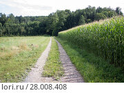 Купить «dirt road between meadow and cornfield in styria», фото № 28008408, снято 18 января 2019 г. (c) PantherMedia / Фотобанк Лори