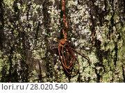 Купить «Tree Bark with Lichens», фото № 28020540, снято 19 октября 2018 г. (c) PantherMedia / Фотобанк Лори