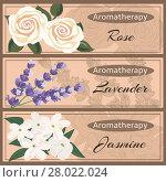Купить «Aromatherapy set collection.», фото № 28022024, снято 24 февраля 2018 г. (c) PantherMedia / Фотобанк Лори