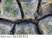Купить «Deep mud cracks in a dry lake bed with sparse vegetation.», фото № 28039812, снято 24 августа 2019 г. (c) PantherMedia / Фотобанк Лори