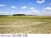 Купить «field with beetroot», фото № 28040148, снято 21 февраля 2018 г. (c) PantherMedia / Фотобанк Лори