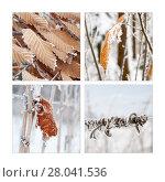 Купить «winter quartet», фото № 28041536, снято 17 декабря 2018 г. (c) PantherMedia / Фотобанк Лори