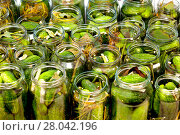 Купить «homemade cucumbers in jars», фото № 28042196, снято 19 августа 2018 г. (c) PantherMedia / Фотобанк Лори