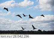 Купить «cranes fly», фото № 28042296, снято 27 мая 2019 г. (c) PantherMedia / Фотобанк Лори