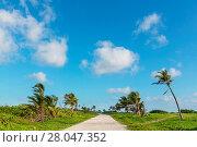 Купить «Road in jungle», фото № 28047352, снято 13 октября 2019 г. (c) easy Fotostock / Фотобанк Лори