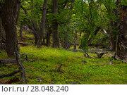 Купить «Woodland views», фото № 28048240, снято 1 февраля 2017 г. (c) Яков Филимонов / Фотобанк Лори