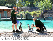 Купить «ZSL London Zoo Annual weigh in 2016. Home to more than 700 different species, zookeepers regularly record the heights and weights of all the creatures...», фото № 28056832, снято 24 августа 2016 г. (c) age Fotostock / Фотобанк Лори