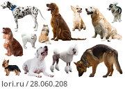 Купить «dog breed set», фото № 28060208, снято 10 декабря 2019 г. (c) Яков Филимонов / Фотобанк Лори