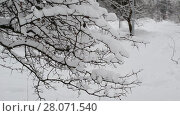 Купить «branches of bush covered with snow», видеоролик № 28071540, снято 31 января 2018 г. (c) Володина Ольга / Фотобанк Лори