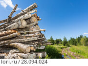 Купить «Cut tree logs piled up near a forest road in sunny summer day», фото № 28094024, снято 31 июля 2017 г. (c) FotograFF / Фотобанк Лори