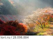 Купить «Nagoya, Obara Sakura in autumn», фото № 28098884, снято 25 июня 2019 г. (c) easy Fotostock / Фотобанк Лори