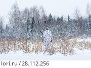 Купить «Зимняя охота», фото № 28112256, снято 9 декабря 2017 г. (c) Павел Родимов / Фотобанк Лори