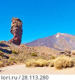 Купить «Tenerife, Canary Islands», фото № 28113280, снято 10 декабря 2017 г. (c) Роман Сигаев / Фотобанк Лори