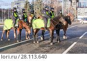 Купить «Отряд женской конной полиции на городской улице в Самаре», фото № 28113640, снято 16 ноября 2017 г. (c) FotograFF / Фотобанк Лори