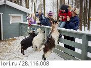 Купить «Three children and two adults feed goats in fold on winter day», фото № 28116008, снято 4 февраля 2017 г. (c) Losevsky Pavel / Фотобанк Лори