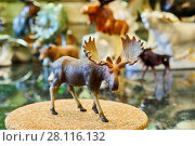 Купить «MOSCOW, RUSSIA - OCT 28, 2016: Figurine of standing bull elk at private collection», фото № 28116132, снято 28 октября 2016 г. (c) Losevsky Pavel / Фотобанк Лори