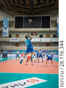 Купить «MOSCOW - NOV 5, 2016: Athletes play volleyball at game Dynamo (Moscow) and Ural (Ufa) in Palace of Sports Dynamo», фото № 28116344, снято 5 ноября 2016 г. (c) Losevsky Pavel / Фотобанк Лори