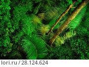 Купить «Tropical dense forest from top», фото № 28124624, снято 18 января 2019 г. (c) easy Fotostock / Фотобанк Лори