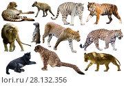 Купить «Set of African predators isolated over white», фото № 28132356, снято 15 октября 2018 г. (c) Яков Филимонов / Фотобанк Лори