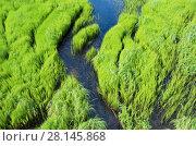 Купить «Весенний пейзаж с ручьем в зеленой траве», фото № 28145868, снято 4 июля 2013 г. (c) Икан Леонид / Фотобанк Лори