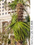 Купить «Листья пальмы на фоне гостиницы Four Seasons Hotel Moscow на Манежной площади», фото № 28153468, снято 26 сентября 2015 г. (c) Алёшина Оксана / Фотобанк Лори