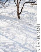 Купить «Солнечный день зимой», фото № 28154588, снято 31 января 2018 г. (c) Алёшина Оксана / Фотобанк Лори
