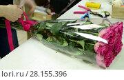 Купить «florist tie ribbon on a bouquet of pink roses», видеоролик № 28155396, снято 11 марта 2018 г. (c) Володина Ольга / Фотобанк Лори