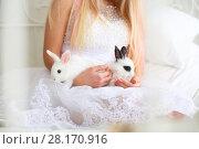 Купить «Blonde in bride white dress holds two funny fluffy cubs of rabbit on bed, noface», фото № 28170916, снято 20 ноября 2015 г. (c) Losevsky Pavel / Фотобанк Лори