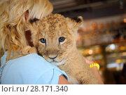 Купить «Blonde holds calf of lion on her shoulder, back view, close up», фото № 28171340, снято 13 июля 2016 г. (c) Losevsky Pavel / Фотобанк Лори