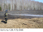 Купить «MOSCOW - APR 12, 2015: Firefighter with a hose extinguish a burning dry grass along the birch grove in the spring», фото № 28172044, снято 12 апреля 2015 г. (c) Losevsky Pavel / Фотобанк Лори