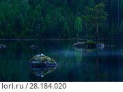 Купить «Mew gull (Larus canus) resting on rock, Hallefors, Sweden, June.», фото № 28184020, снято 23 сентября 2018 г. (c) Nature Picture Library / Фотобанк Лори
