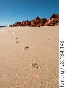 Купить «Footsteps on the white sands, Broome, Kimberley, Western Australia. July 2016.», фото № 28184148, снято 23 мая 2018 г. (c) Nature Picture Library / Фотобанк Лори