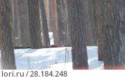 Купить «KAZAN, RUSSIA - March, 2018: male participant winter ski race fast running past the trees», видеоролик № 28184248, снято 9 апреля 2020 г. (c) Константин Шишкин / Фотобанк Лори