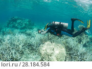 Купить «Photographer Jurgen Freund taking pictures of coral bleaching in the northern Great Barrier Reef, Queensland, Australia March 2017. Model released.», фото № 28184584, снято 22 марта 2018 г. (c) Nature Picture Library / Фотобанк Лори