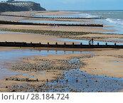 Купить «Cromer beach at  low tide with groynes, North Norfolk, England, UK, September», фото № 28184724, снято 16 июля 2018 г. (c) Nature Picture Library / Фотобанк Лори
