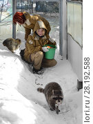 Купить «Moscow zoo. Zookeepers  with raccoons (Procyon lotor) in winter», фото № 28192588, снято 18 марта 2018 г. (c) Валерия Попова / Фотобанк Лори