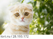 Купить «close up of kitten over natural background», фото № 28193172, снято 19 июля 2015 г. (c) Syda Productions / Фотобанк Лори