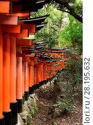 Купить «A long row of orange Torii gates at Fushimi Inari Taisha head shrine in Kyoto, Japan.», фото № 28195632, снято 20 ноября 2017 г. (c) age Fotostock / Фотобанк Лори
