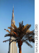Купить «United Arab Emirates United Arab Emirates, Dubai, Burj Khalifa, highest Skycraper in the World, 828 meter, Burj Dubai», фото № 28202080, снято 19 ноября 2018 г. (c) age Fotostock / Фотобанк Лори