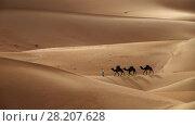 Купить «Camel caravan in desert sand dunes», фото № 28207628, снято 19 августа 2018 г. (c) Михаил Коханчиков / Фотобанк Лори